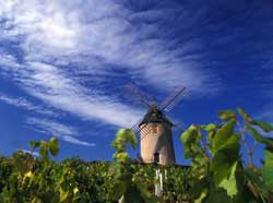Beaujolais In Transition